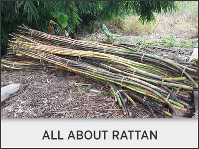 All About Rattan